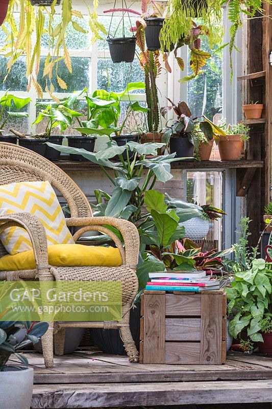 View into conservatory, with wicker chair and hanging houseplants.