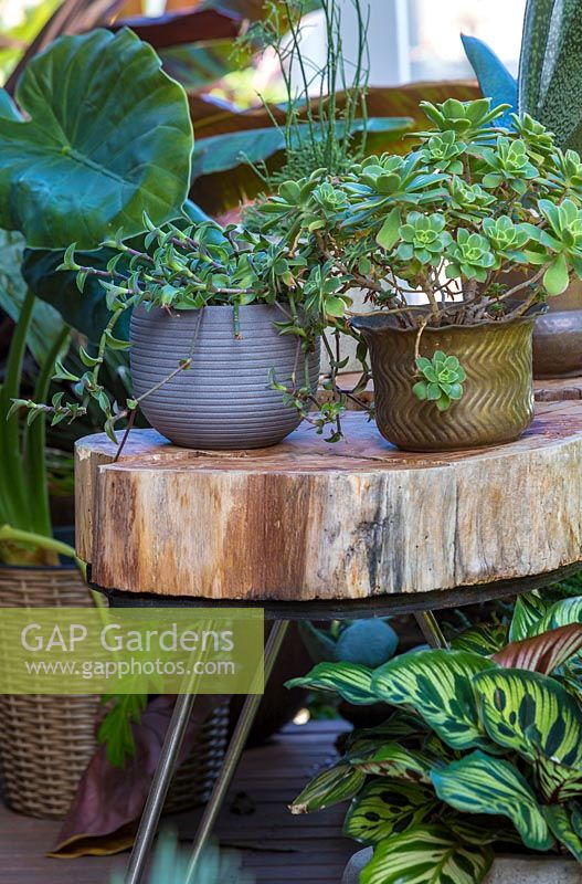 A duo of pots sitting on top of a bespoke sliced log tables on a timber verandah.