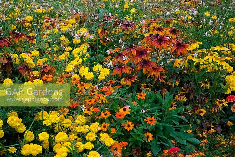 Flowerbed with flowering perennials in warm colours.