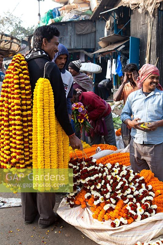 Man standing holding garlands of Tagetes - marigolds at flower market