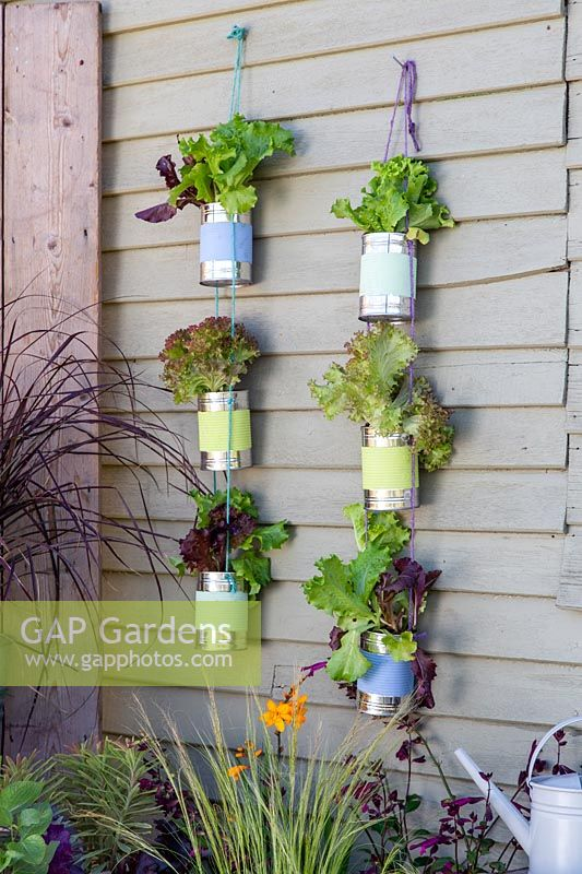 Strings of painted tin cans planted with lettuce
