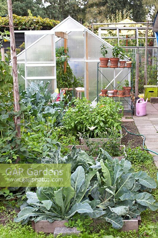 Greenhouse in the kitchen garden with vegetables planted raised beds.