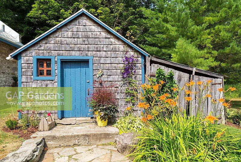 Shed with Hemerocallis and Clematis