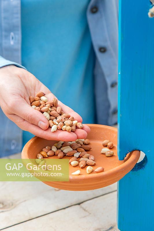 Filling terracotta saucer with seeds and nuts for birds.