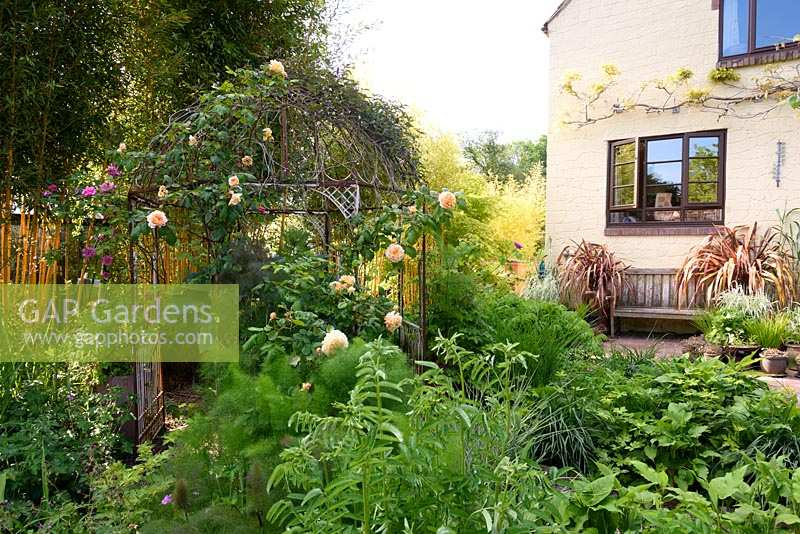 Roses on ornamental metal arbour with perennials and grasses, Gloucester, UK