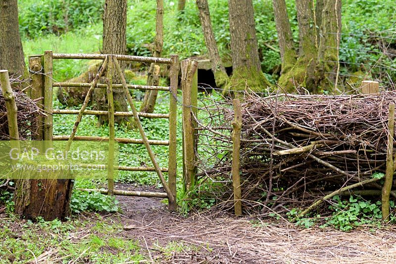 Gate in 'fedge' - a fence and hedge made using wood cuttings, Ross-on-Wye, Herefordshire