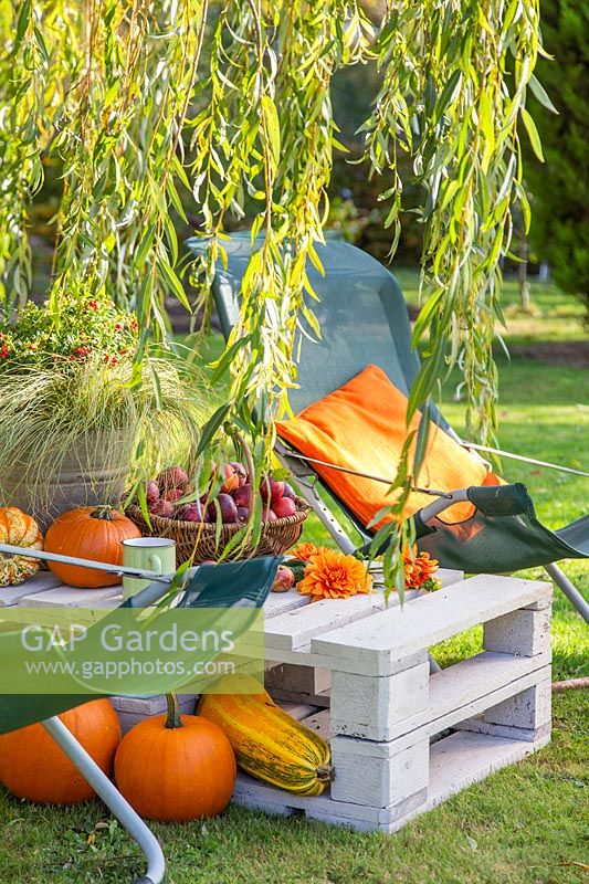 Pallet table with garden chairs, pumpkins and sqaushes under weeping willow.