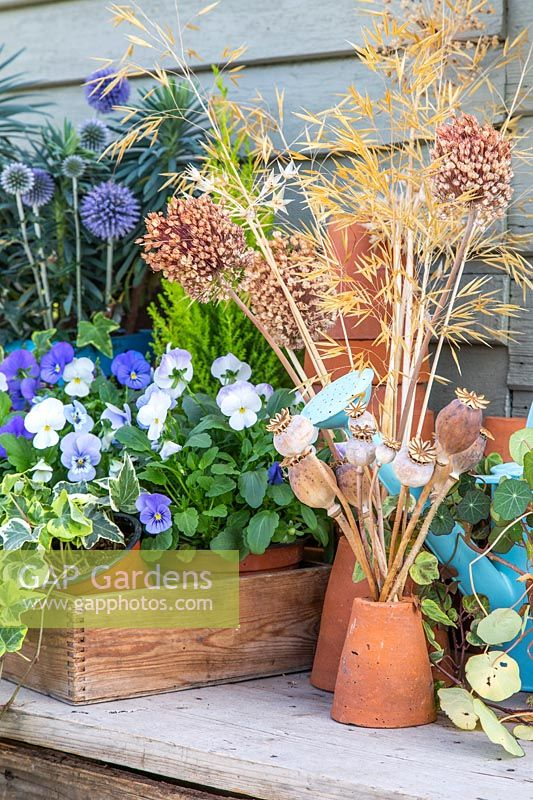 Autumnal still life, with dried seedheads, stacked terracotta pots and wooden crate of flowering Viola.