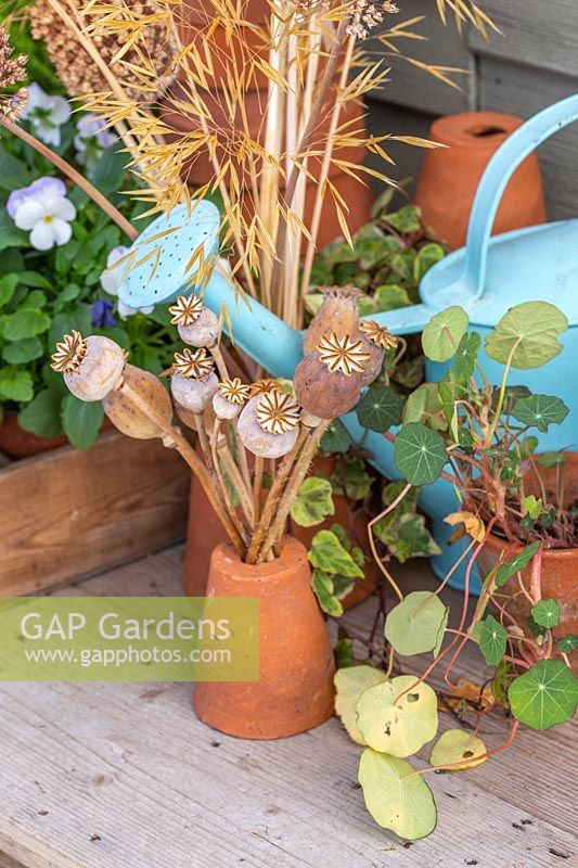 Autumnal still life with Poppy seedheads, terracotta pots and watering can.