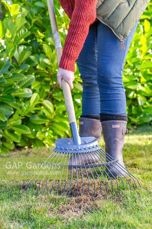 Woman raking moss and dead grass out of patch of lawn to loosten up soil.
