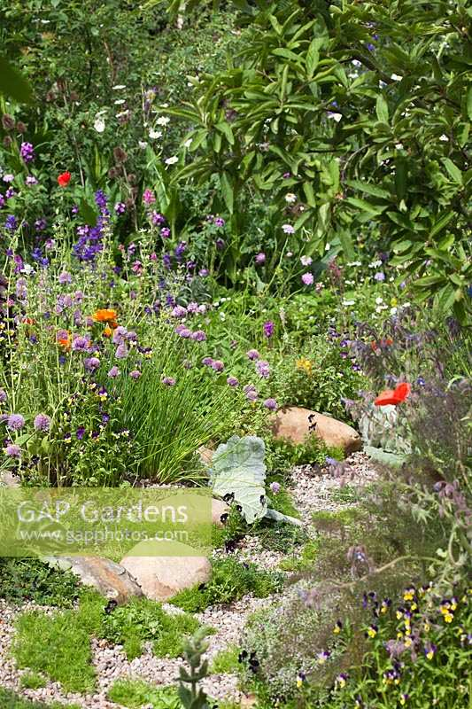 Pebble path with Chives, Calendula and Chamomile, RHS Chelsea Flower Show 2011