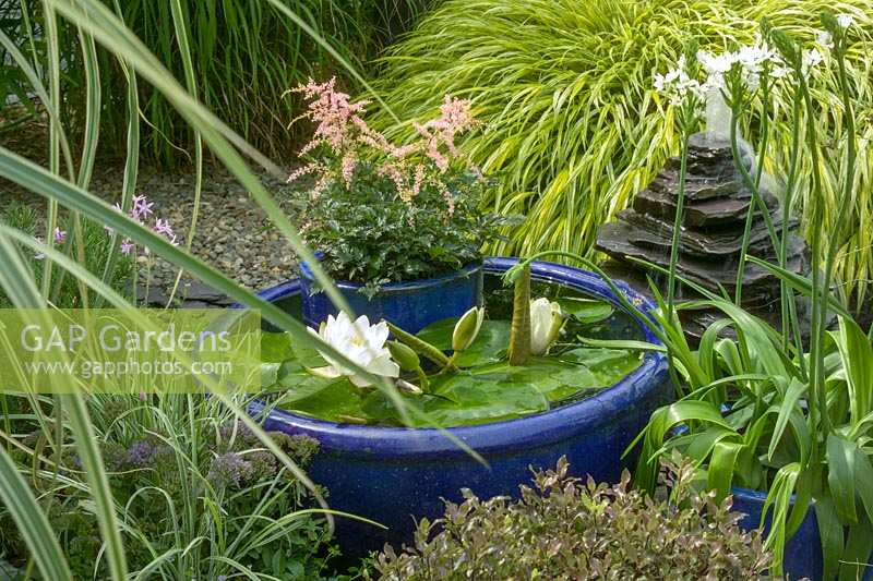 Small water feature and container pond, with Nymphaea - Lily pads.