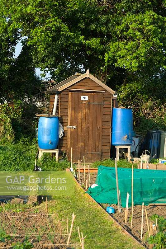 Allotment shed with two water butts to conserve water