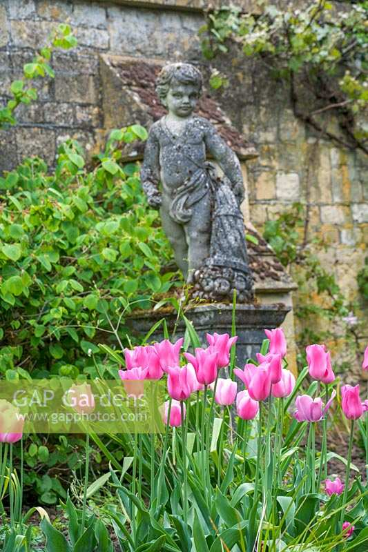 Tulipa 'Esther' and statue of boy, Sudeley Castle, Gloucestershire, UK.