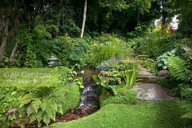 Shaded garden stream with marginal planting.