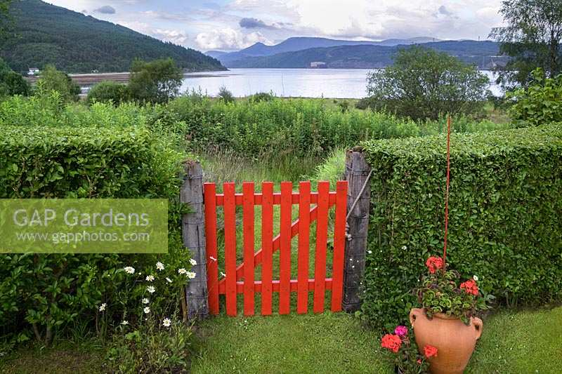 Back garden privet hedge with red gate and view to Loch Long, Dunoon, Scotland, UK.