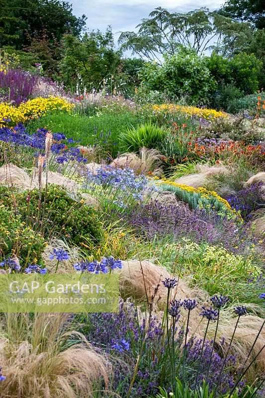 Extensive planting of perennials such as ornamental grass Stipa tenuissima with flowering plants such as Agapanthus