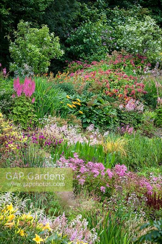 Bed of mixed flowering perennials in front of shrubs, plants include Astilbe, Hemerocallis, Rodgersia