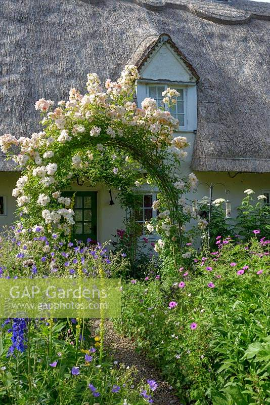 Cottage garden with rose arch covered in Rosa 'Phyllis Bide' - Rose  'Phyllis Bide'