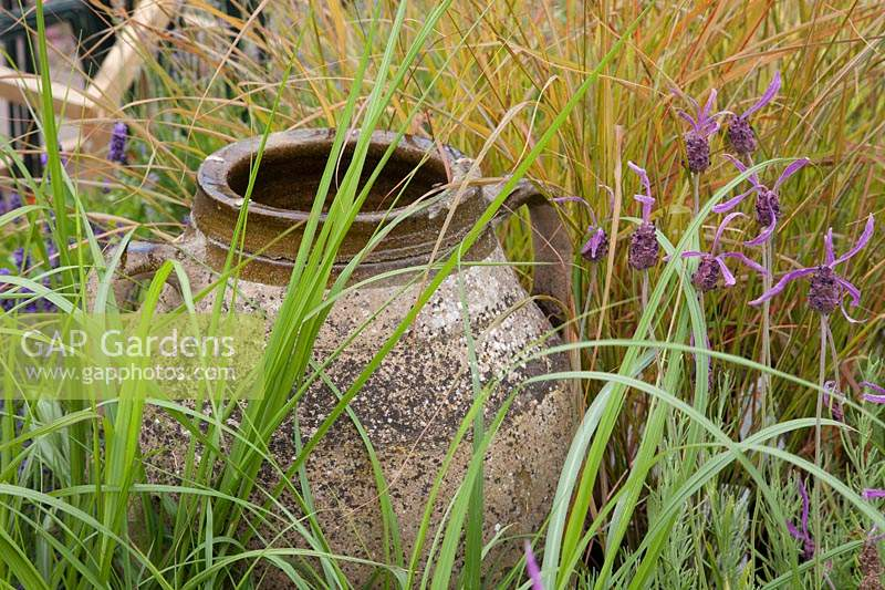 Empty urn surrounded by French Lavender and ornamental grasses.
