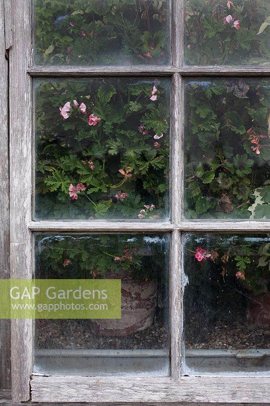 View of potted plant through window of Parham House Glasshouse