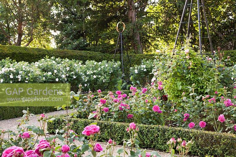 Formal rose garden with obelisks and low, clipped topiary hedges. Arundel Castle, West Sussex, UK.