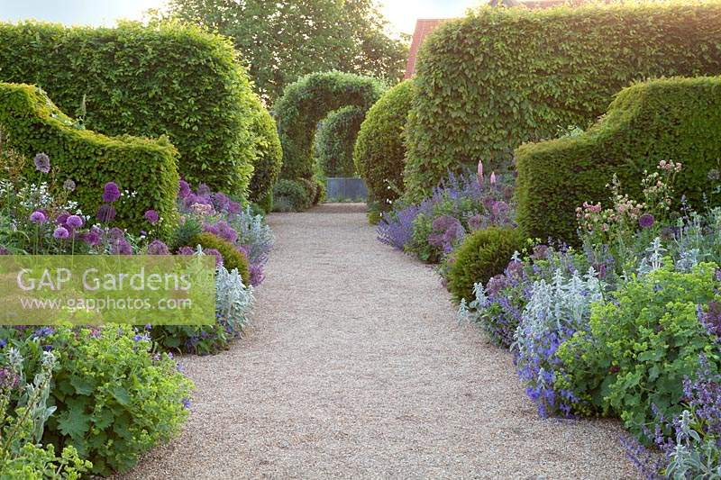 Repeated perennial planting of Nepeta, Stachys, alliums, geraniums, Alchemilla mollis and aquilegias with clipped hedges. Arundel Castle, West Sussex, UK.