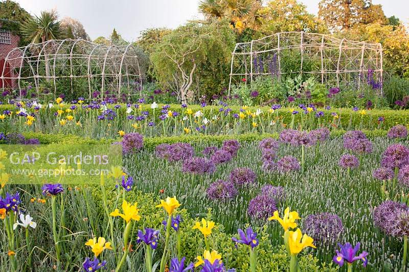 Colourful summer floral display of mixed Iris, Alliums and Lavender 'Hidcote' with clipped hedges and rustic arbour. Arundel Castle, West Sussex, UK