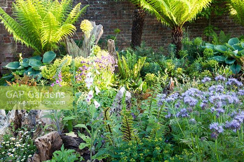 Stumpery with sculptural wooden stumps and tree ferns. Arundel Castle, West Sussex, UK.