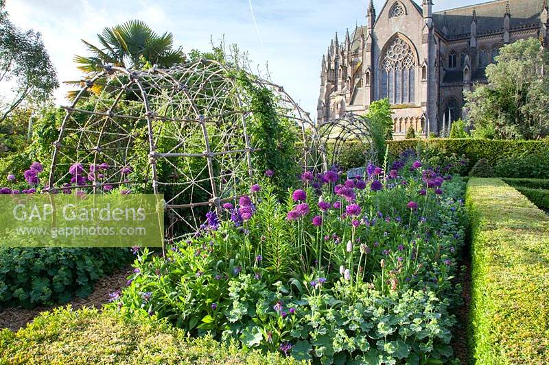 Alliums, centaurea and Alchemilla mollis with Cathedral beyond