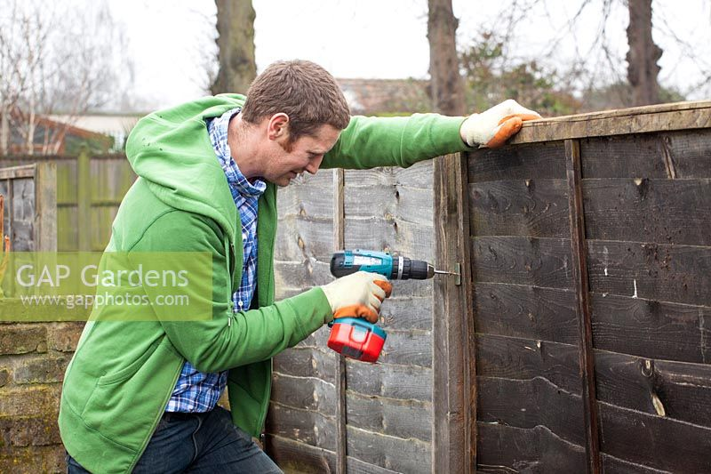 Man repairing a wooden fence panels using a drill.