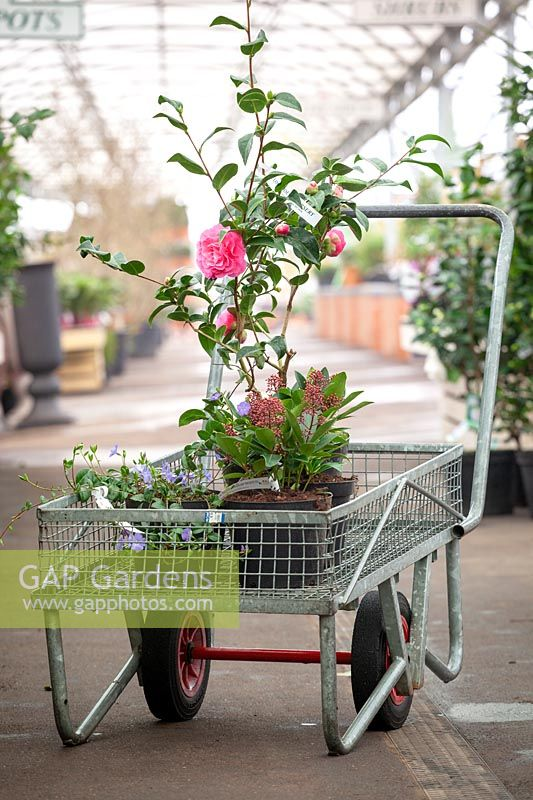 Trolley filled with plants in a garden centre.