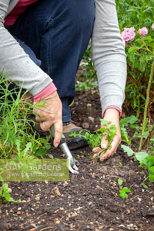 Person weeding a border with a hand fork.