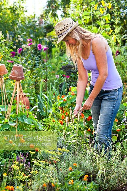 Woman picking herbs in potager