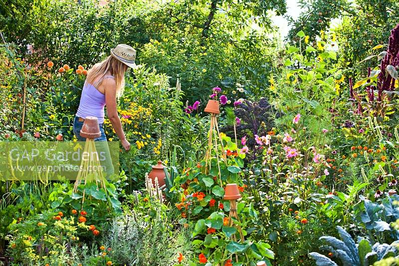 Woman picking herbs in a potager