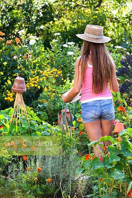 Person standing with colander of lettuce leaves in a potager style garden