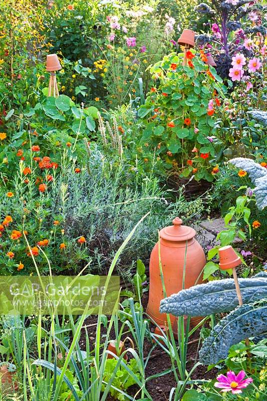 Vegetable garden in potager style with vegetables, flowers and herbs growing together