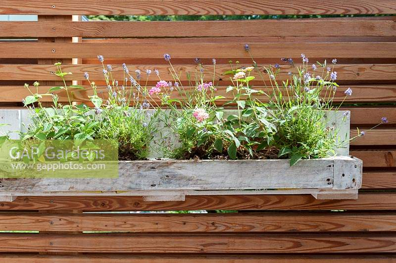 Flower box made out of europallet, planted with Lavandula -  lavender and Verbena.