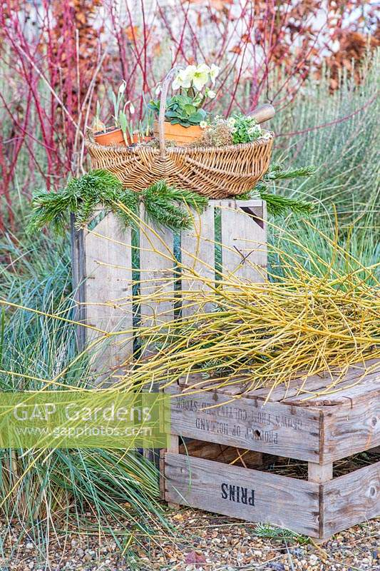 Wooden crates with Cornus stick bundle and wicker backset of flowering perennials.