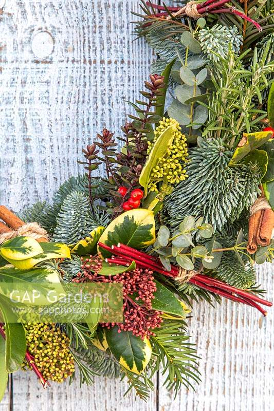 Close up of wreath, decorated with Skimmia, Ilex - holly, Cornus - dogwood - 