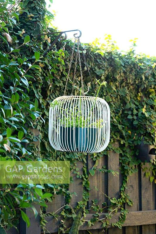 A retro-style white wire light-fitting repurposed to hold a potted Rhipsalis, suspended from bracket on fence post.