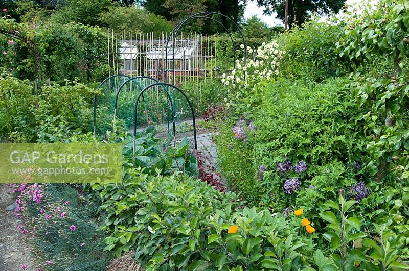 Ornamental kitchen garden showing arches, hoops and rows of canes in amongst flowers and foliage