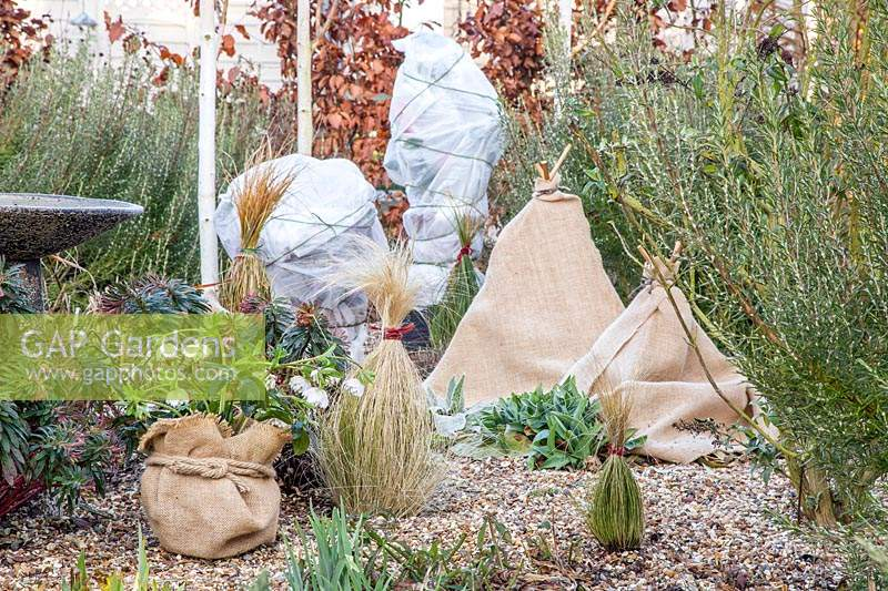 Protecting tender plants in winter using hessian and fleece.
