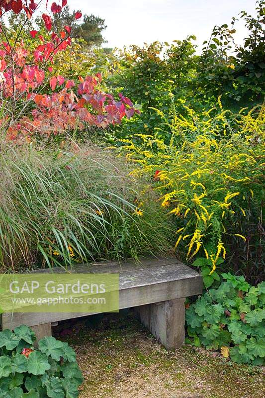 A wooden bench is surrounded by Panicum virgatum 'Rubrum', Solidago rugosa 'Firecracker', Alchemilla mollis and Cercis canadensis 'Forest Pansy'.