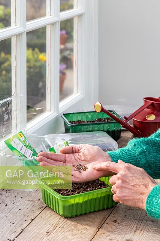 Woman gently tapping hand to sow seeds evenly in plastic trays.