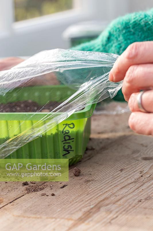 Woman adding plastic film as lid to aid germination of seeds.
