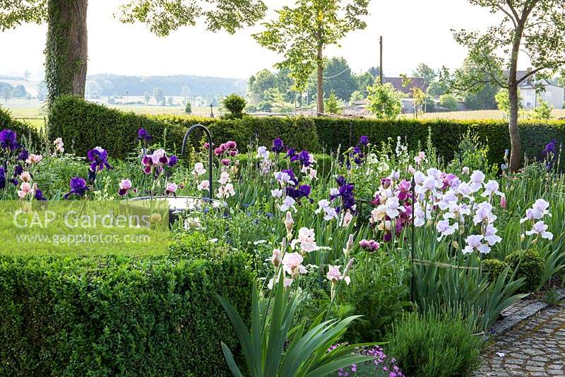 Iris border and water well in a garden framed with high hedges