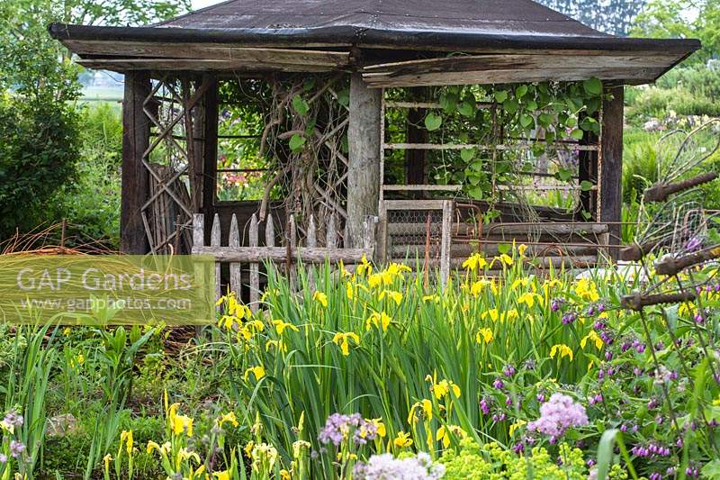 Nature is invading an old wooden pavilion, in the foreground plants from the damp water zone as Iris pseudacorus