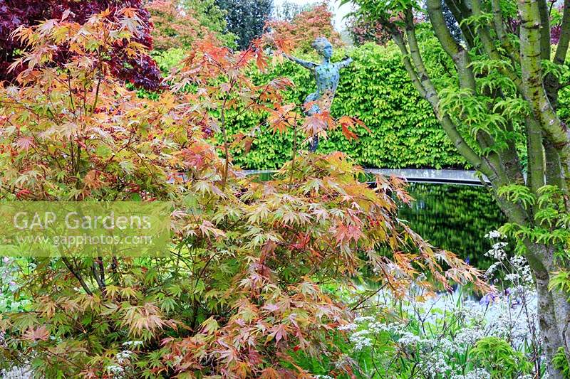 'The Leaf Creative Garden', view through Acer palmatum 'Nicholsonii' - Japanese Maple - to mirror pool with a 