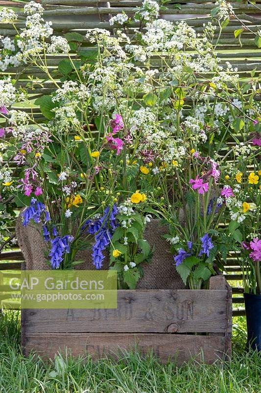 Wildflowers on 'Sophie's Country Garden Flowers' display